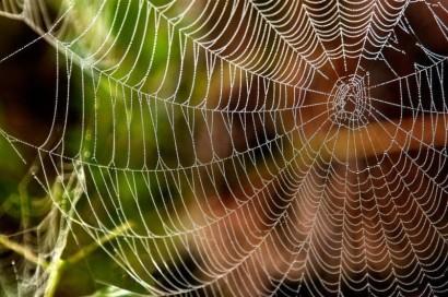 spider-silk-01-998e5c96299c37497576c526b9f3ea31f